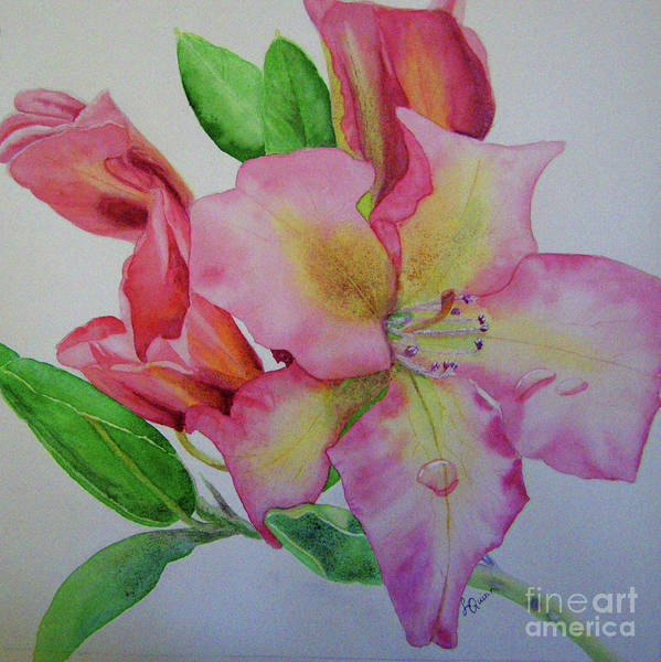 Painting - Rhodie With Dew I by Lynn Quinn