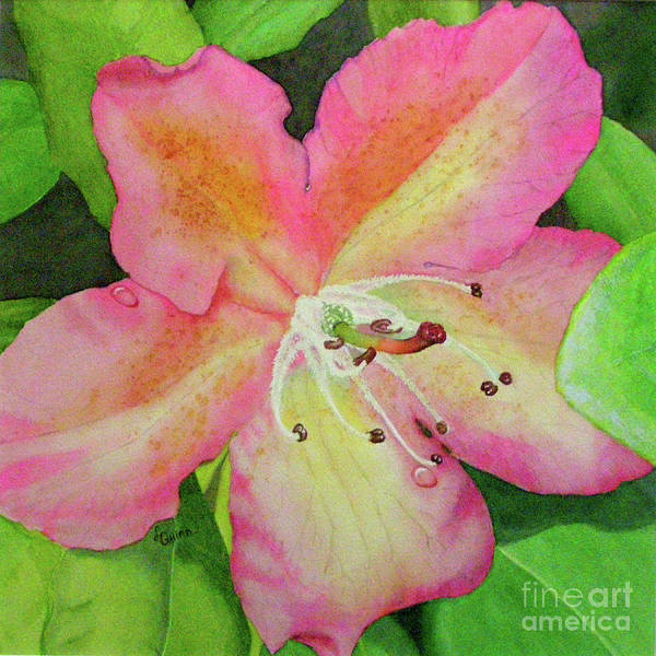 Painting - Rhodie With Dew II by Lynn Quinn