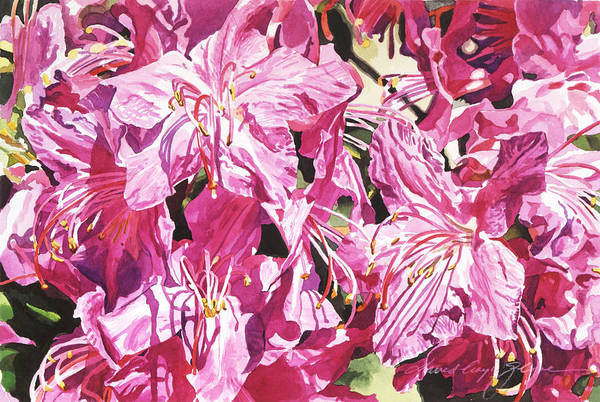 Painting - Rhodo Blossoms by David Lloyd Glover