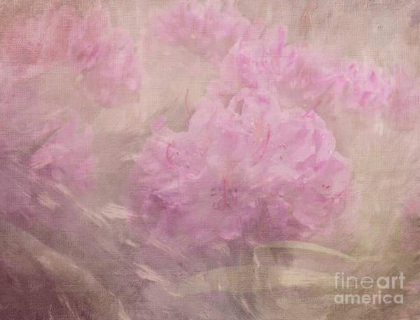 Azalia Photograph - Rhododendron Dream by Arlene Carmel