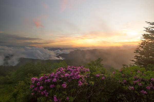 Photograph - Rhododendron Sunset by Doug McPherson