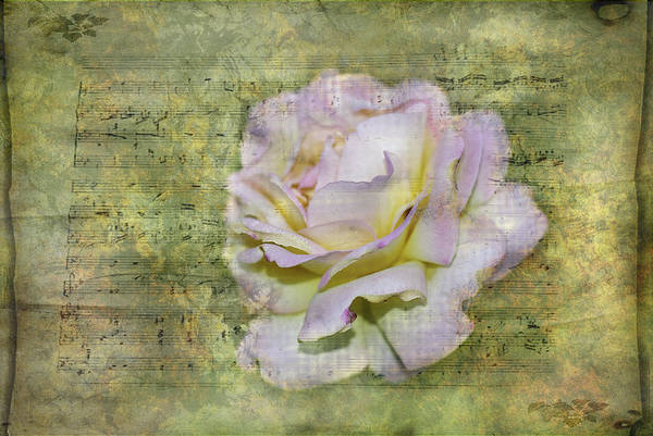 Photograph - Rhythm Of Love by Judy Hall-Folde