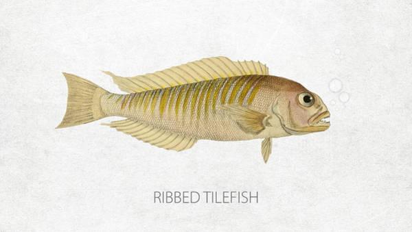 Wall Art - Digital Art - Ribbed Tilefish by Aged Pixel