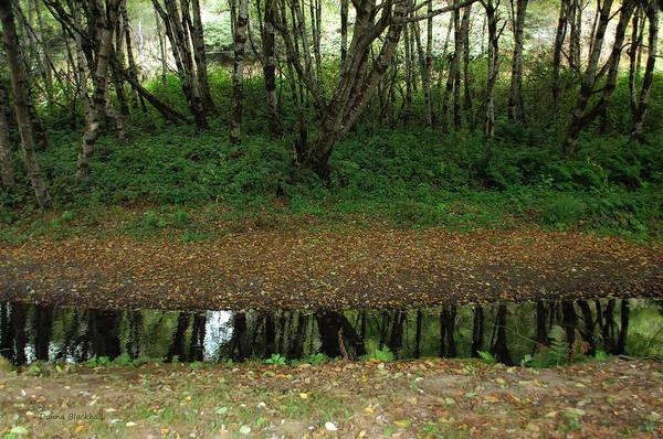 Wall Art - Photograph - Ribbon Of Reflection by Donna Blackhall