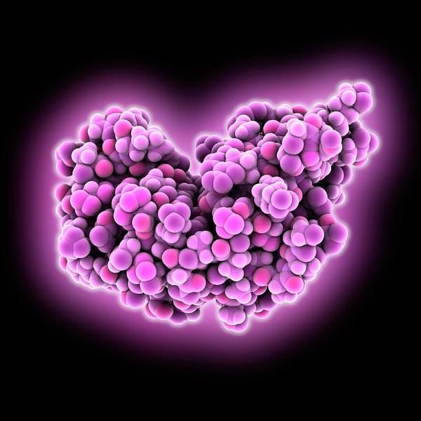 Biochemistry Photograph - Ribonuclease A Molecule by Laguna Design