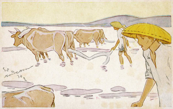 Vietnam Drawing - Rice Cultivation In Indochina  - Card by Mary Evans Picture Library