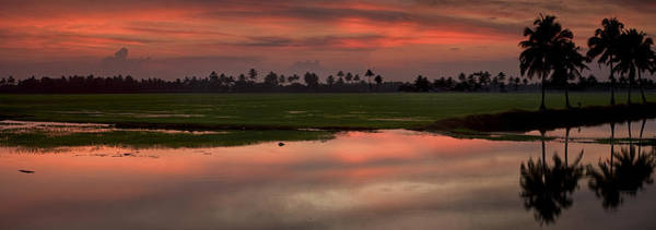 Kerala Photograph - Rice Fields Of India by Andrew Soundarajan