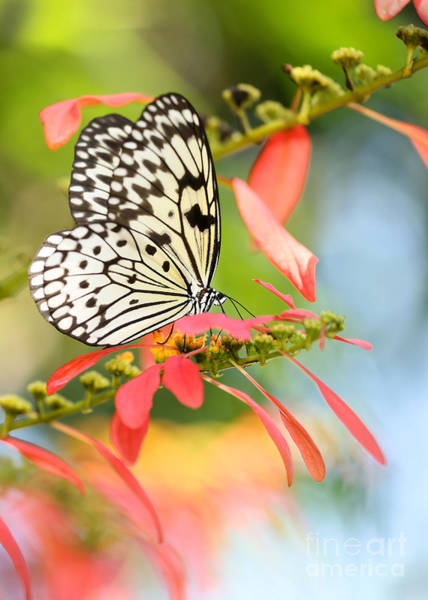 Rice Paper Butterfly In The Garden Art Print