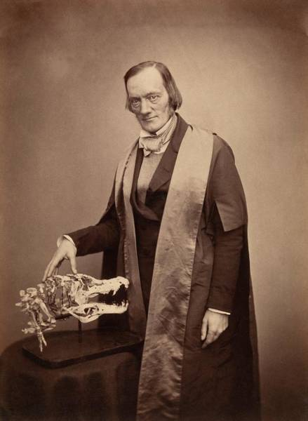 Comparative Wall Art - Photograph - Richard Owen by Royal Institution Of Great Britain / Science Photo Library