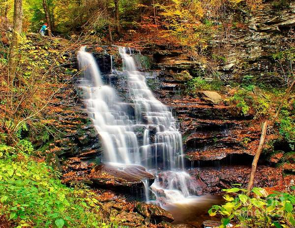 Photograph - Ricketts Glen - Erie Falls by Nick Zelinsky