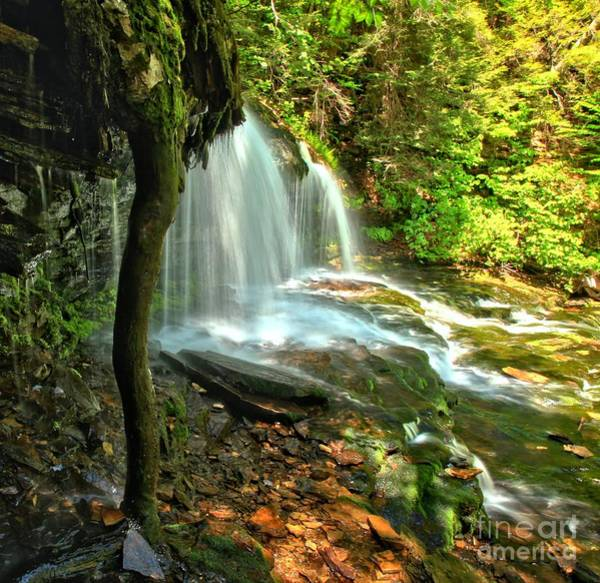 Photograph - Ricketts Glen Mohawk Falls by Adam Jewell