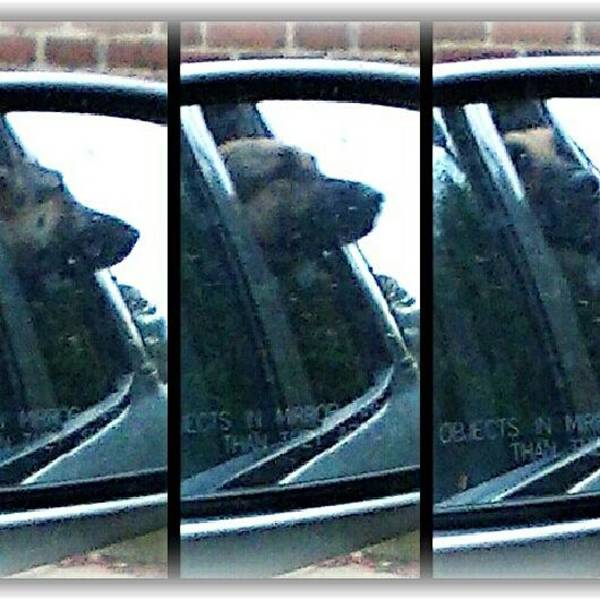 Photograph - Ride In The Car by Thomasina Durkay