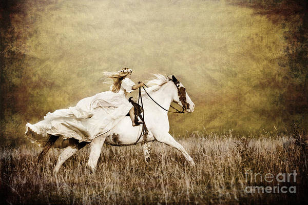 Golden Princess Photograph - Ride Like The Wind by Cindy Singleton