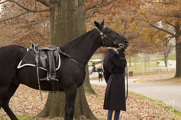 Honor Guard Photograph - Riderless Horse by Terry Rowe