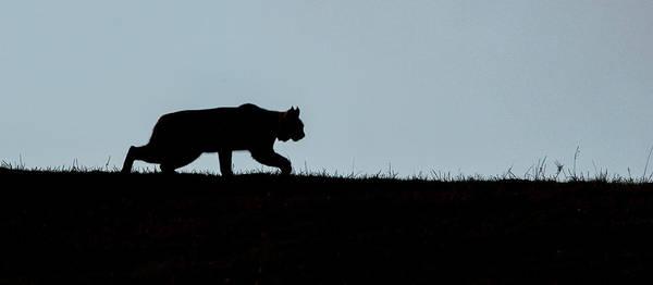 Photograph - Ridge Stalk  by Kevin  Dietrich