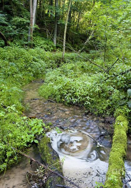 Photograph - Ridgeway Creek by Steven Ralser