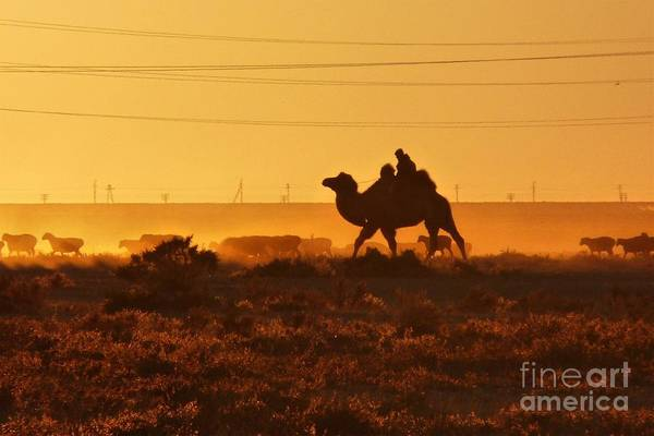 Photograph - Riding Into The Sunset by Karla Weber