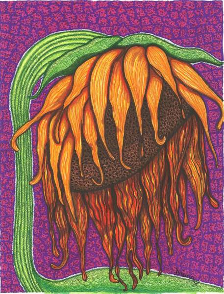 Sunflower Seeds Drawing - Right Facing Sunflower by Diane Pugh