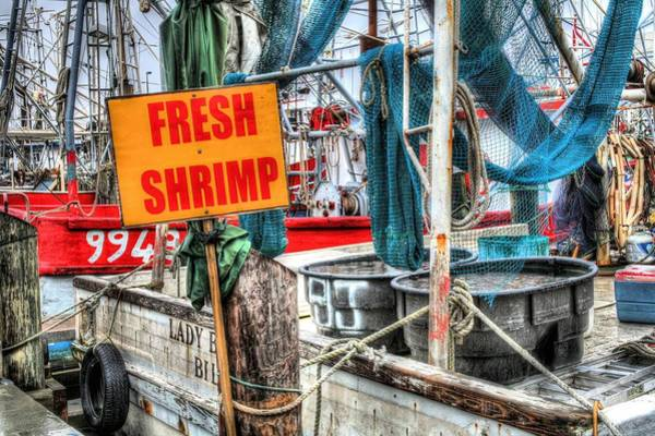 Photograph - Right Off The Boat by JC Findley