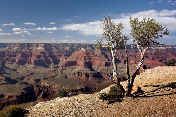 Photograph - Rim Of The Grand Canyon by Jean Clark