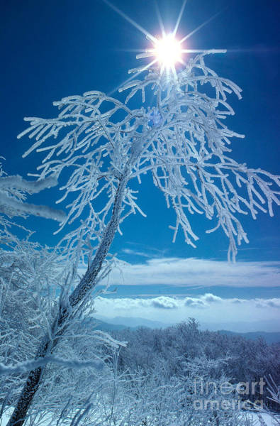 Photograph - Rime On Tree by Frank J Miller