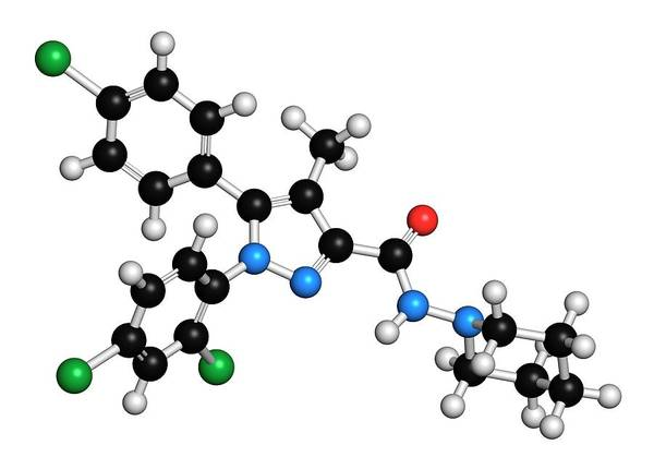 Index Photograph - Rimonabant Obesity Drug Molecule by Molekuul