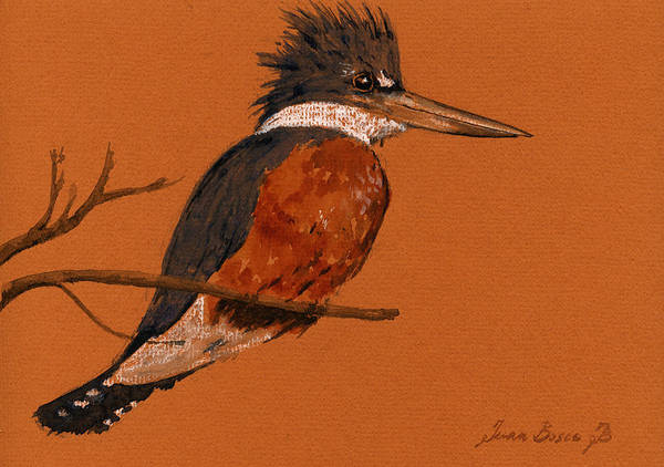 Natur Wall Art - Painting - Ringed Kingfisher Bird by Juan  Bosco