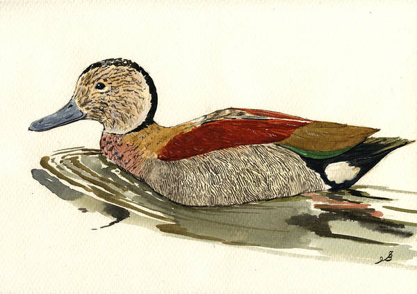 Ring Painting - Ringed Teal by Juan  Bosco