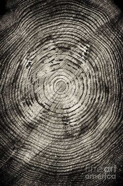Tree Trunk Photograph - Rings Of Time  by Tim Gainey