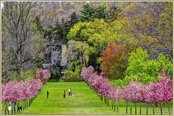 Dafodil Photograph - Ringwood Botanical Gardens 4 by Geraldine Scull