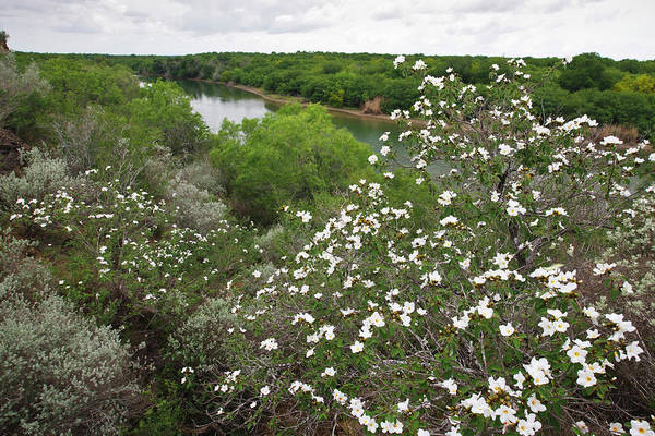 Boundary County Photograph - Rio Grande, South Texas by Larry Ditto