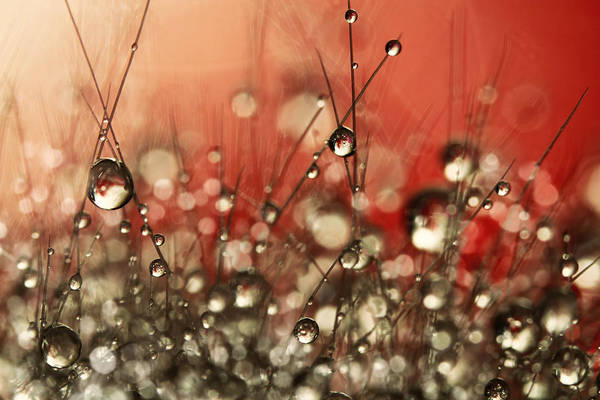 Wall Art - Photograph - Riot Red Cactus Sparkles by Sharon Johnstone
