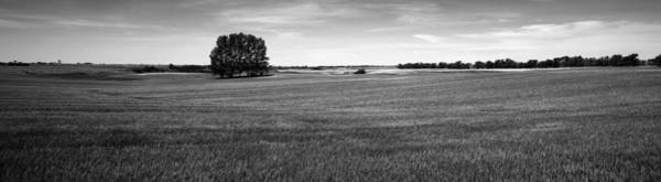 Wall Art - Photograph - ripening wheat field under blue sky BW by Donald  Erickson