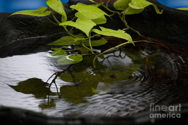 Photograph - Ripple In The Water by Dale Powell