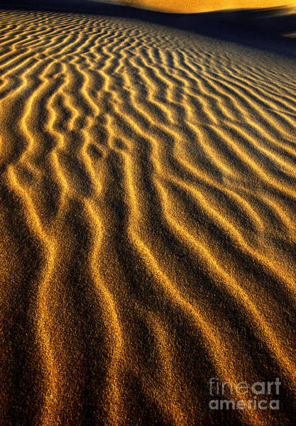Photograph - Ripples Oregon Dunes National Recreation Area by Dave Welling