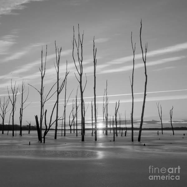 D800 Photograph - Rising Through The Sticks by Michael Ver Sprill