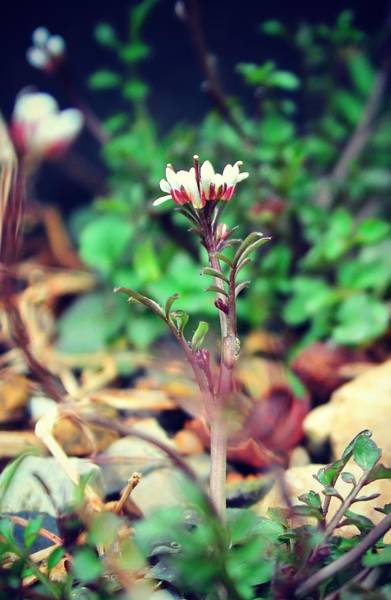 Photograph - Rising Wildflower by Candice Trimble