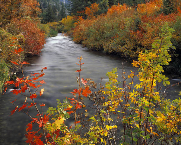 Photograph - River Color by Leland D Howard