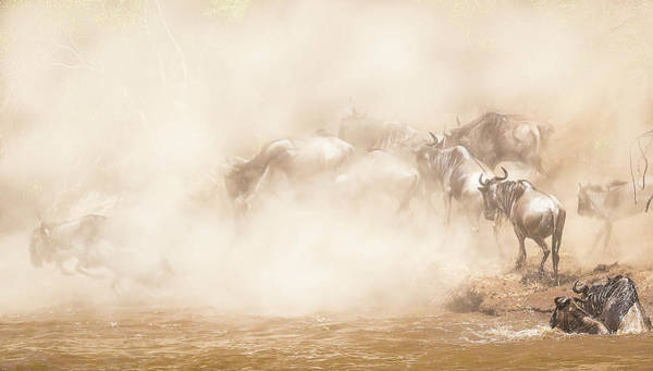 Jumping Photograph - River Crossing by Eunice Kim