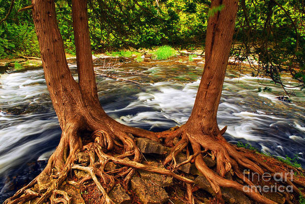 Wall Art - Photograph - River by Elena Elisseeva