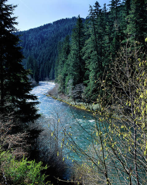 Douglas County Wall Art - Photograph - River Flowing Through A Forest, North by Panoramic Images