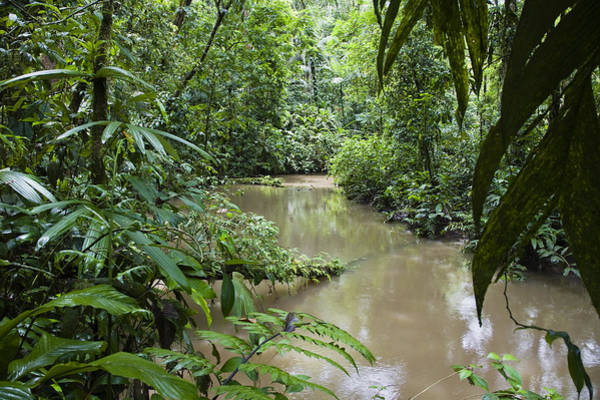 Carrillo Photograph - River In Lowland Rainforest Park Costa by Konrad Wothe