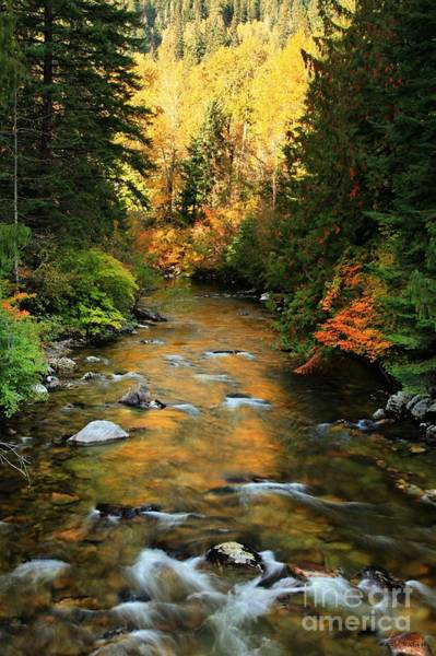 Wall Art - Photograph - River Of Gold by Winston Rockwell