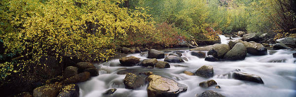 Peacefulness Photograph - River Passing Through A Forest, Inyo by Panoramic Images