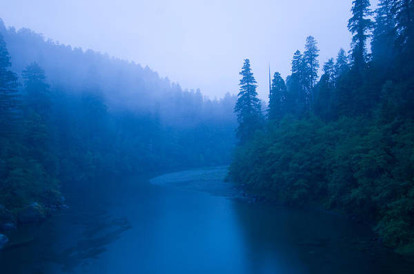Redwood City Wall Art - Photograph - River Passing Through A Forest by Panoramic Images
