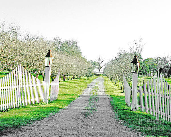 Digital Art - River Road Gate by Lizi Beard-Ward