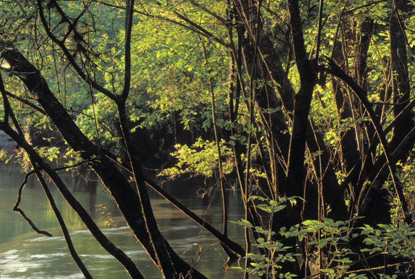 Chartreuse Photograph - River Shoreline by Peter Essick