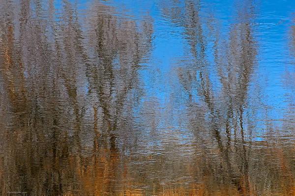 Photograph - River Trees by Britt Runyon