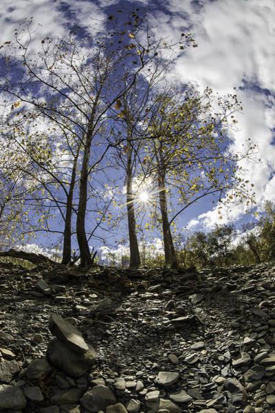Photograph - Riverbank Trees by Sara Hudock