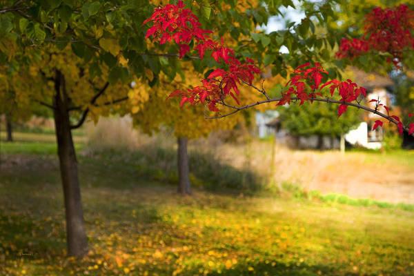 Art In Canada Photograph - Riverbend Orchard by Theresa Tahara